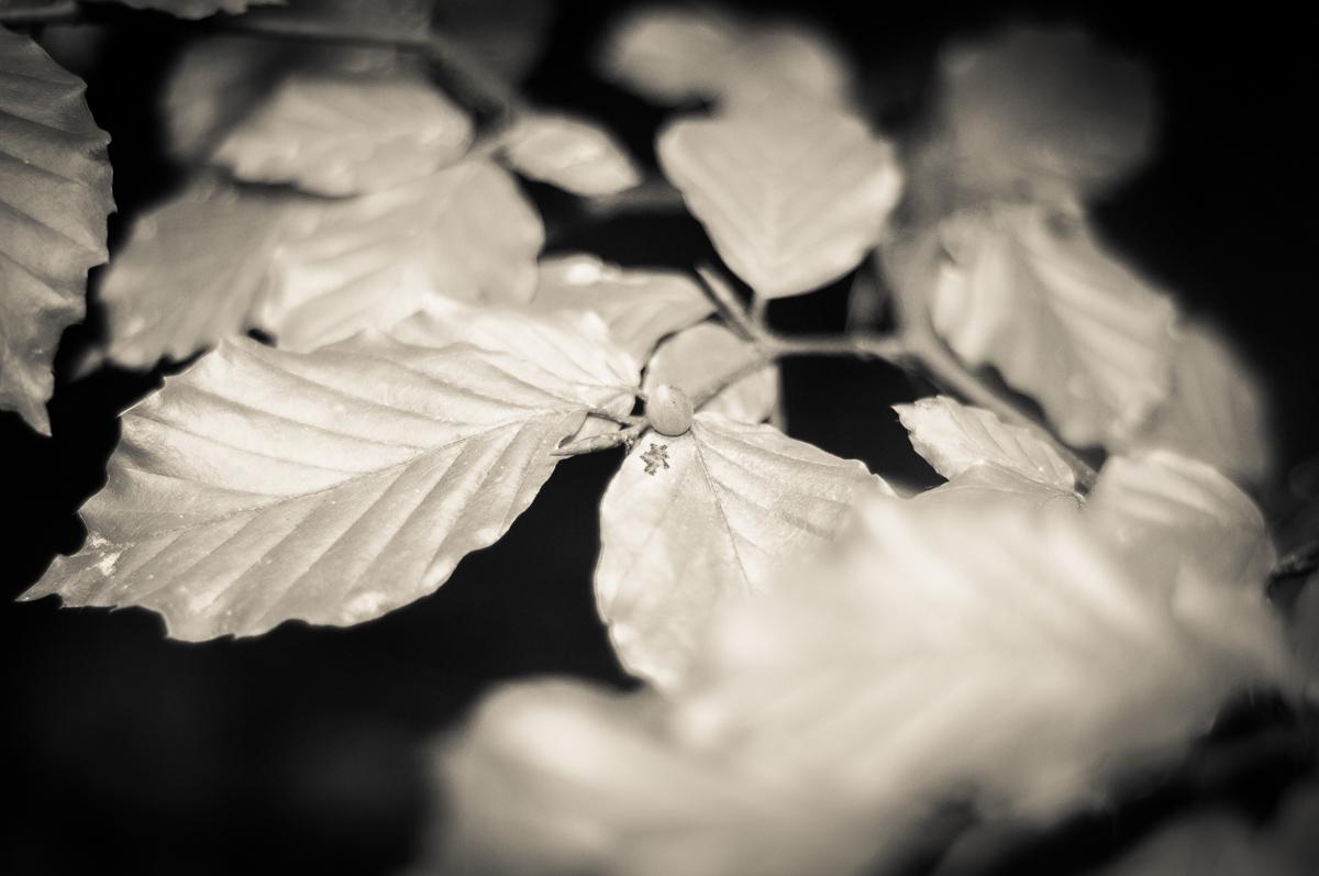 Jesenné snímky 3