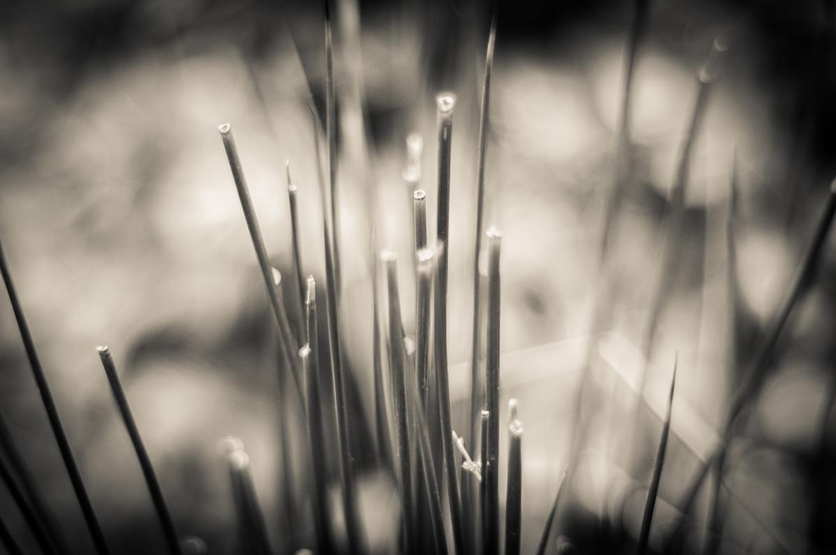 Jesenné snímky 6